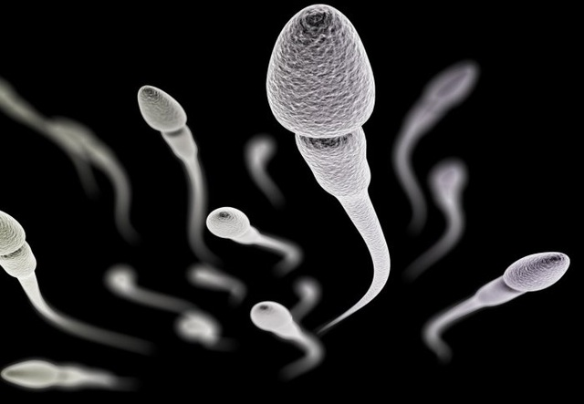 Thực phẩm để cách tăng chất lượng tinh trùng